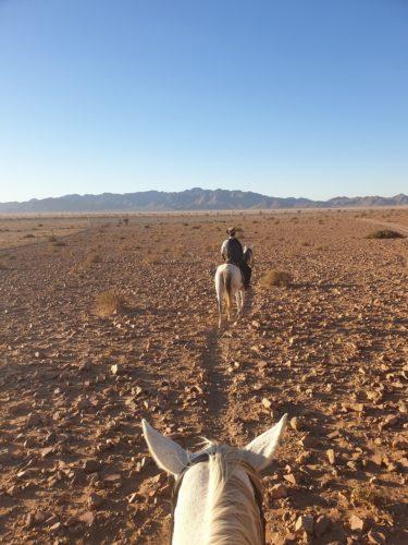 Ausritt Pferd Reiten Horse