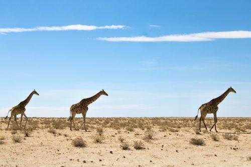 Namibia Afrika Roadtrip Rundreise Wanderlust