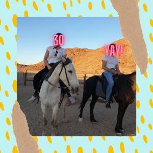 Pferd_Namibia_uebermich